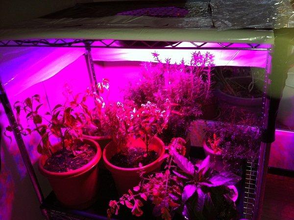 Indoor Cannabis Grow Lights