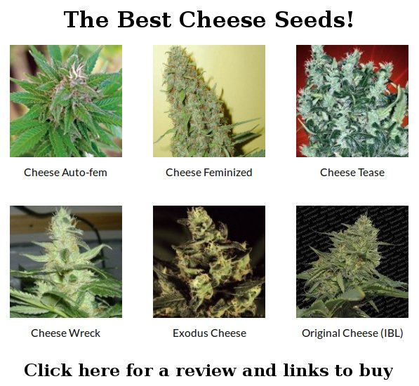best cheese seeds