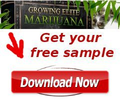 grow elite marijuana