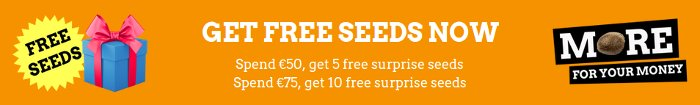 free cannabis seeds from Weed Seed Shop