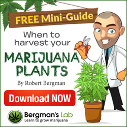 free harvesting marijuana report